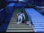 Uncharted 3 : démonstration de la GamesCom (Evénement)
