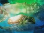Far Cry 3 E3 2012 Teaser (Evénement)
