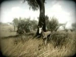 Far Cry 2 - Environment Trailer (Teaser)