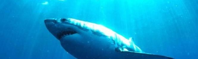 Jaws arrive sur PS2 et Xbox